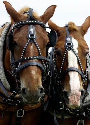 Horses work